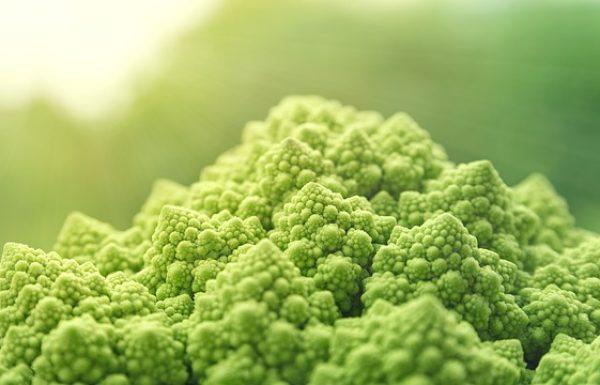 איך שומרים על הבריאות בתזונה טבעונית?